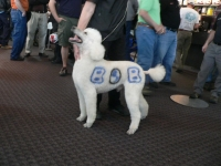 bob-dog2